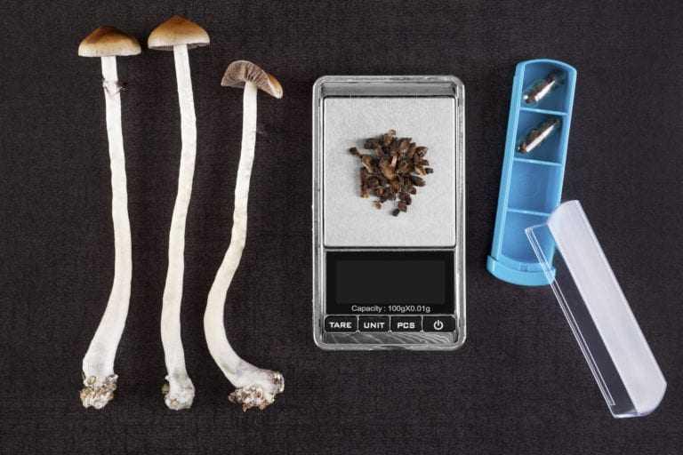 Psilocybin mushroom.