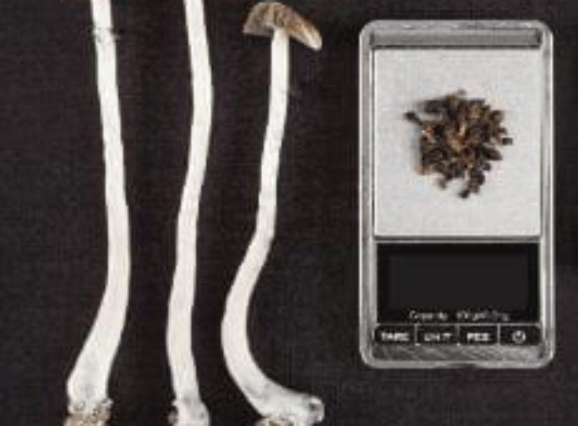 Learn More | Buy Psilocybin Magic Mushroom Online Canada