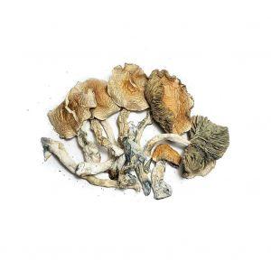 golden-teacher-magic-mushroom-canada