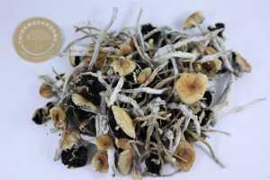 B+ | Buy Psilocybin Magic Mushroom Online Canada