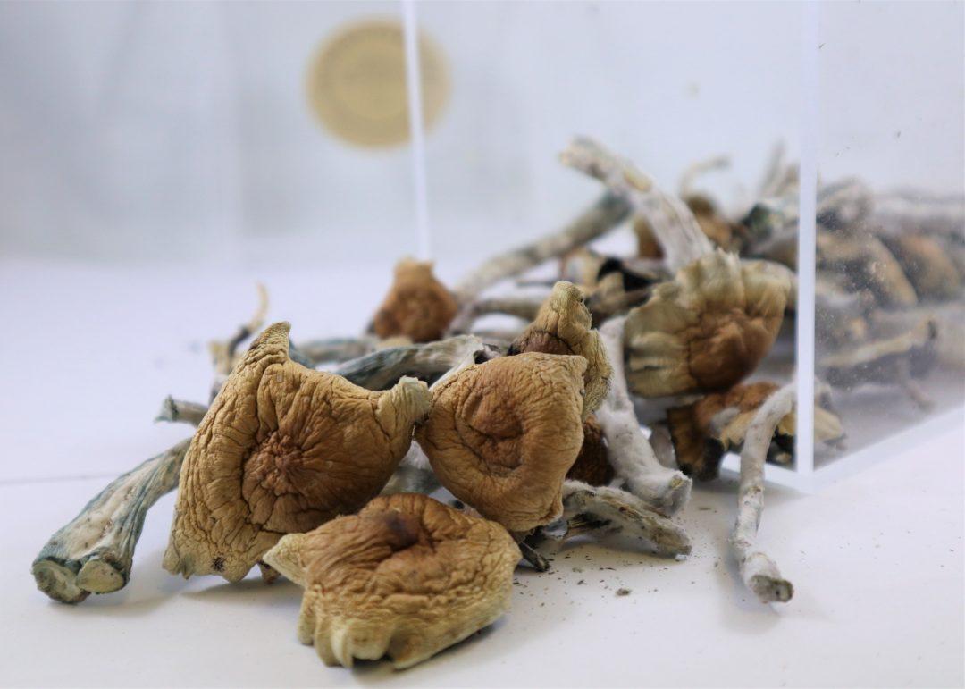 Brazilian Mushroom | Buy Psilocybin Magic Mushroom Online Canada