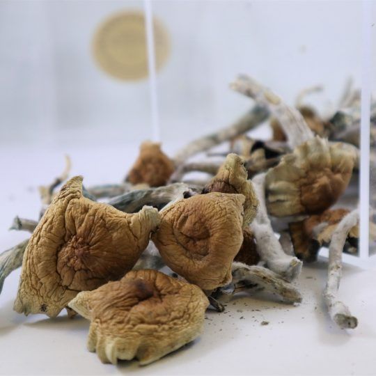 Dried Mushrooms | Buy Psilocybin Magic Mushroom Online Canada