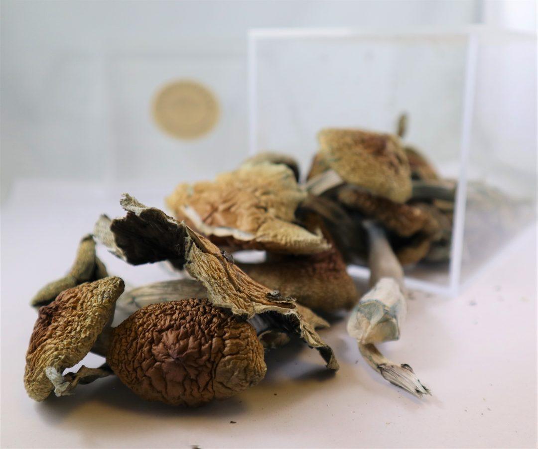 Costa Rican Mushrooms | Buy Psilocybin Magic Mushroom Online Canada