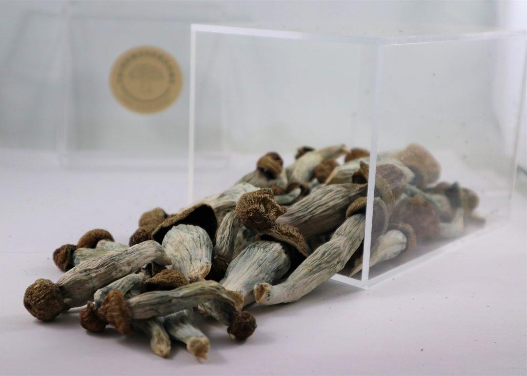 Mel Mac Mushrooms | Buy Psilocybin Magic Mushroom Online Canada